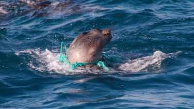 DANGEROUS ENTANGLEMENT: Plastic waste is littering the oceans, threatening the lives of millions of marine animals.